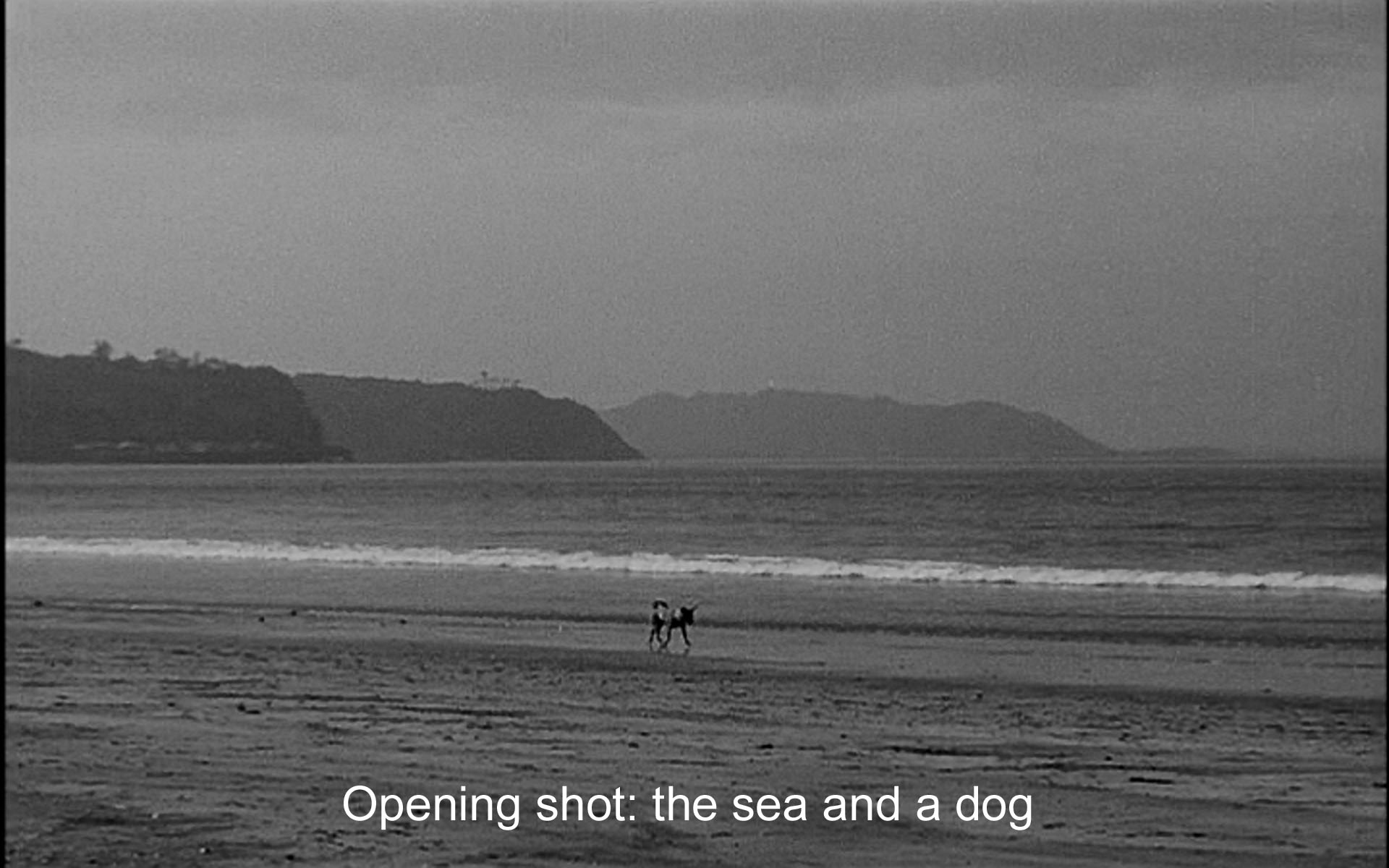The opening shot: the sea and a dog
