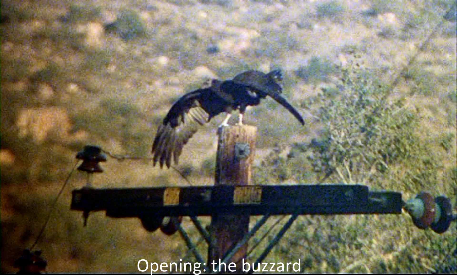 Opening: the buzzard