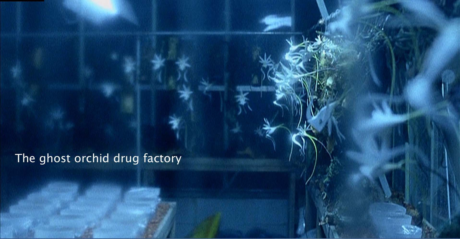 The ghost orchid drug factory